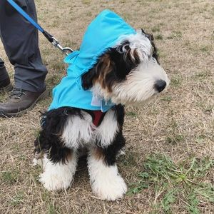 Small Dog Rain Jacket